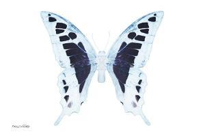 Miss Butterfly Cloanthus - X-Ray White Edition by Philippe Hugonnard
