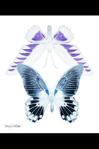 Miss Butterfly Duo Brookagenor II - X-Ray B&W Edition by Philippe Hugonnard