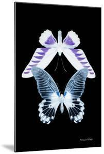 Miss Butterfly Duo Brookagenor II - X-Ray Black Edition by Philippe Hugonnard