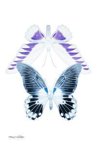 Miss Butterfly Duo Brookagenor II - X-Ray White Edition by Philippe Hugonnard