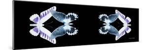 Miss Butterfly Duo Brookagenor Pan - X-Ray Black Edition II by Philippe Hugonnard