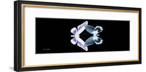 Miss Butterfly Duo Brookagenor Pan - X-Ray Black Edition by Philippe Hugonnard
