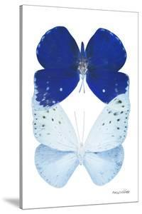 Miss Butterfly Duo Catoploea II - X-Ray White Edition by Philippe Hugonnard