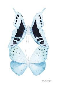Miss Butterfly Duo Cloanthaea II - X-Ray White Edition by Philippe Hugonnard
