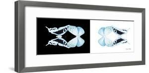 Miss Butterfly Duo Cloanthaea Pan - X-Ray B&W Edition by Philippe Hugonnard