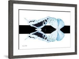Miss Butterfly Duo Cloanthaea - X-Ray B&W Edition II by Philippe Hugonnard
