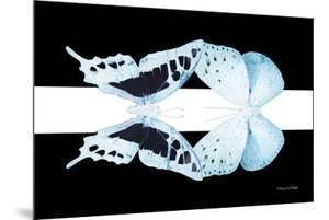 Miss Butterfly Duo Cloanthaea - X-Ray B&W Edition by Philippe Hugonnard