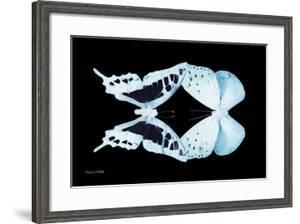 Miss Butterfly Duo Cloanthaea - X-Ray Black Edition by Philippe Hugonnard