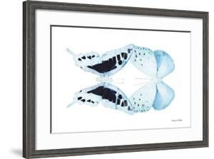 Miss Butterfly Duo Cloanthaea - X-Ray White Edition by Philippe Hugonnard