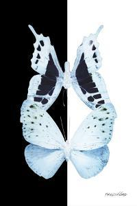 Miss Butterfly Duo Euploanthus II - X-Ray B&W Edition by Philippe Hugonnard