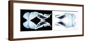 Miss Butterfly Duo Euploanthus Pan - X-Ray B&W Edition by Philippe Hugonnard