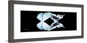 Miss Butterfly Duo Euploanthus Pan - X-Ray Black Edition by Philippe Hugonnard