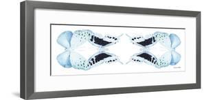 Miss Butterfly Duo Euploanthus Pan - X-Ray White Edition II by Philippe Hugonnard