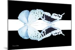 Miss Butterfly Duo Euploanthus - X-Ray B&W Edition II by Philippe Hugonnard