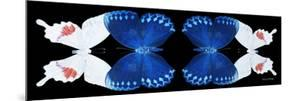 Miss Butterfly Duo Formohermos Pan - X-Ray Black Edition II by Philippe Hugonnard