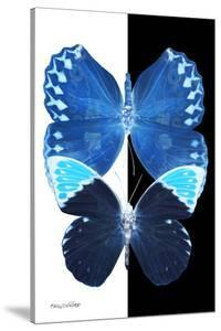 Miss Butterfly Duo Formoia II - X-Ray B&W Edition by Philippe Hugonnard