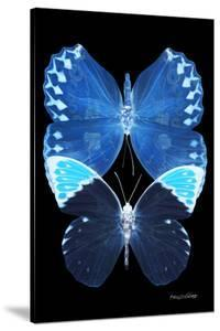 Miss Butterfly Duo Formoia II - X-Ray Black Edition by Philippe Hugonnard