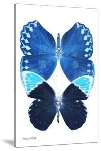 Miss Butterfly Duo Formoia II - X-Ray White Edition by Philippe Hugonnard