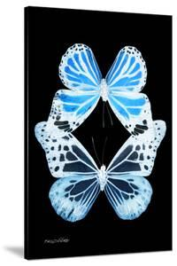 Miss Butterfly Duo Genuswing II - X-Ray Black Edition by Philippe Hugonnard