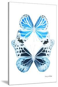 Miss Butterfly Duo Genuswing II - X-Ray White Edition by Philippe Hugonnard