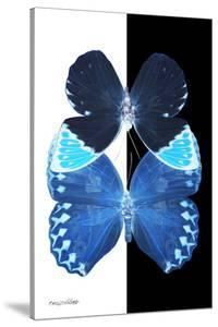 Miss Butterfly Duo Heboformo II - X-Ray B&W Edition by Philippe Hugonnard