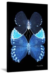 Miss Butterfly Duo Heboformo II - X-Ray Black Edition by Philippe Hugonnard