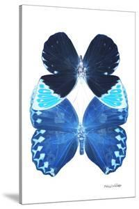 Miss Butterfly Duo Heboformo II - X-Ray White Edition by Philippe Hugonnard