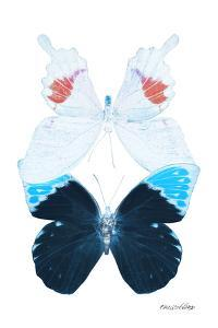 Miss Butterfly Duo Hermosana II - X-Ray White Edition by Philippe Hugonnard