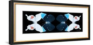 Miss Butterfly Duo Hermosana Pan - X-Ray Black Edition II by Philippe Hugonnard