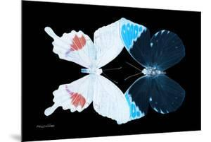 Miss Butterfly Duo Hermosana - X-Ray Black Edition by Philippe Hugonnard