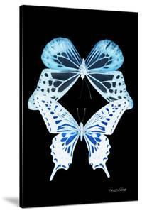 Miss Butterfly Duo Melaxhus II - X-Ray Black Edition by Philippe Hugonnard