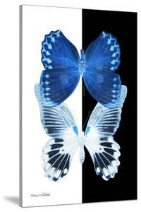 Miss Butterfly Duo Memhowqua II - X-Ray B&W Edition by Philippe Hugonnard