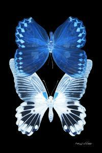 Miss Butterfly Duo Memhowqua II - X-Ray Black Edition by Philippe Hugonnard