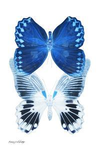 Miss Butterfly Duo Memhowqua II - X-Ray White Edition by Philippe Hugonnard