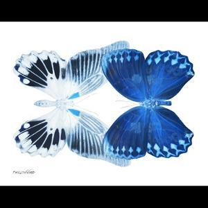Miss Butterfly Duo Memhowqua Sq - X-Ray B&W Edition by Philippe Hugonnard