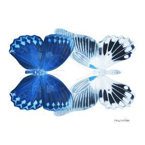 Miss Butterfly Duo Memhowqua Sq - X-Ray White Edition by Philippe Hugonnard