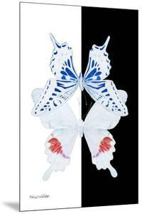 Miss Butterfly Duo Parisuthus II - X-Ray B&W Edition by Philippe Hugonnard
