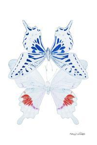 Miss Butterfly Duo Parisuthus II - X-Ray White Edition by Philippe Hugonnard