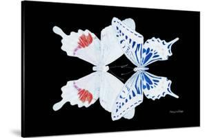 Miss Butterfly Duo Parisuthus - X-Ray Black Edition by Philippe Hugonnard