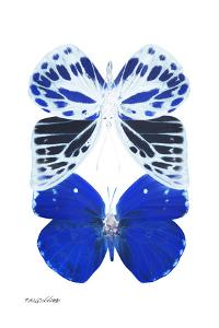 Miss Butterfly Duo Priopomia II - X-Ray White Edition by Philippe Hugonnard