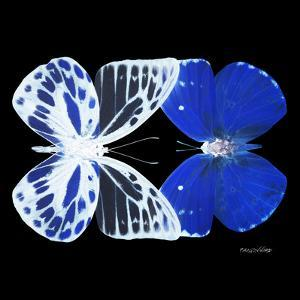 Miss Butterfly Duo Priopomia Sq - X-Ray Black Edition by Philippe Hugonnard