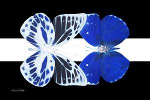 Miss Butterfly Duo Priopomia - X-Ray B&W Edition II by Philippe Hugonnard