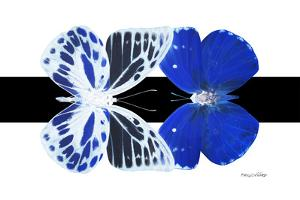 Miss Butterfly Duo Priopomia - X-Ray B&W Edition by Philippe Hugonnard