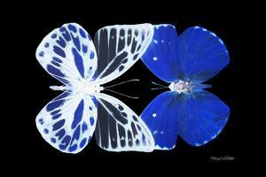 Miss Butterfly Duo Priopomia - X-Ray Black Edition by Philippe Hugonnard