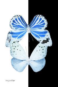 Miss Butterfly Duo Salateuploea II - X-Ray B&W Edition by Philippe Hugonnard