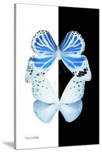 Miss Butterfly Duo Salateuploea II - X-Ray B&W Edition by Philippe Hugonnard