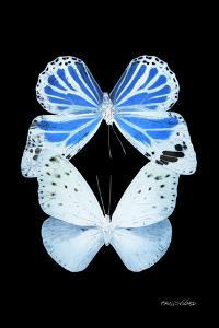 Miss Butterfly Duo Salateuploea II - X-Ray Black Edition by Philippe Hugonnard