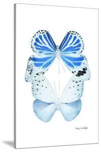 Miss Butterfly Duo Salateuploea II - X-Ray White Edition by Philippe Hugonnard