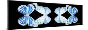 Miss Butterfly Duo Salateuploea Pan - X-Ray Black Edition II by Philippe Hugonnard