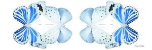 Miss Butterfly Duo Salateuploea Pan - X-Ray White Edition II by Philippe Hugonnard